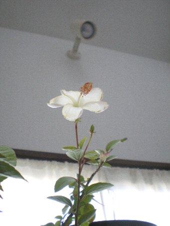 f0206605_20143460.jpg