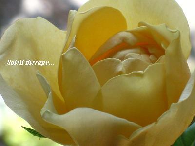 バラ「ジャンヌダルク」&おもしろ実ものでセラピーレッスン☆_c0098807_2033988.jpg