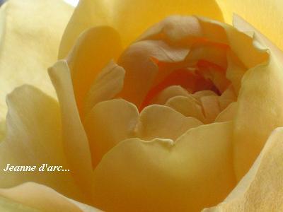 バラ「ジャンヌダルク」&おもしろ実ものでセラピーレッスン☆_c0098807_20515433.jpg