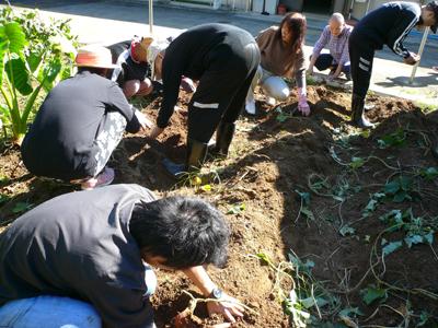サツマイモ収穫祭(^O^)_a0154110_13273338.jpg
