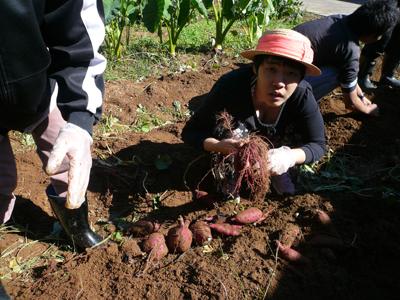サツマイモ収穫祭(^O^)_a0154110_1327453.jpg