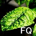 フルオロキノロンを投与された糖尿病患者では重症血糖異常のリスクが増加_e0156318_1218325.jpg