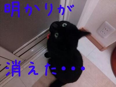 d0170555_17364172.jpg
