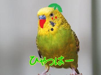 f0196665_2023947.jpg