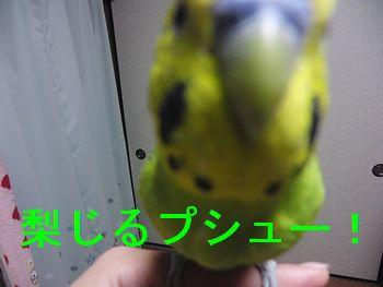 f0196665_20432517.jpg