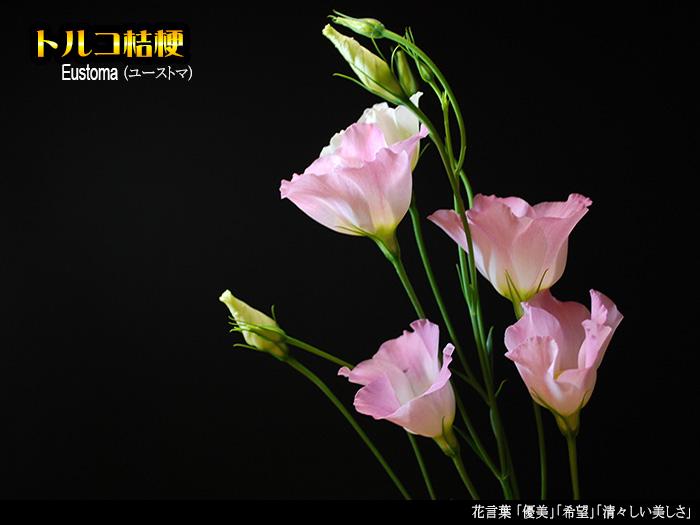 c0009981_15471210.jpg