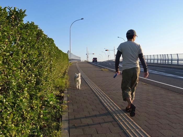子犬 台風が過ぎて_c0049299_15593654.jpg