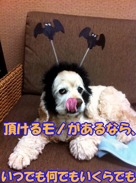 b0067012_044020.jpg