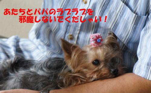 b0001440_1533060.jpg