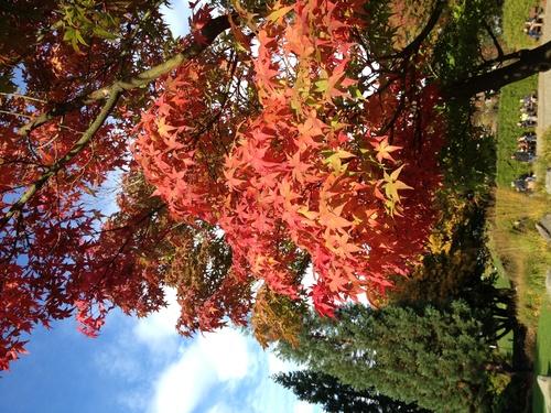 日本庭園の紅葉_b0300862_21173548.jpg