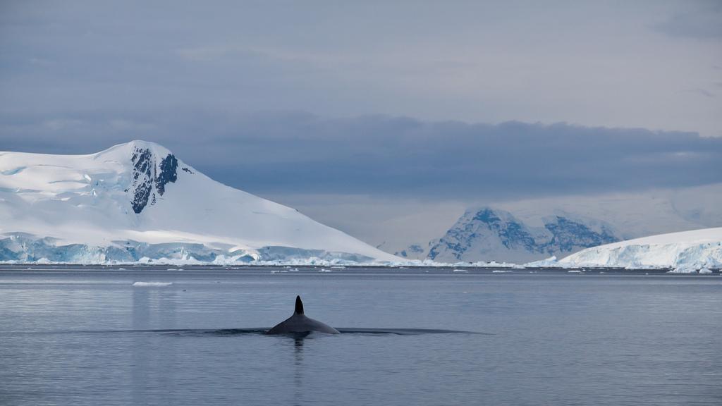 whale song_b0060102_4125212.jpg