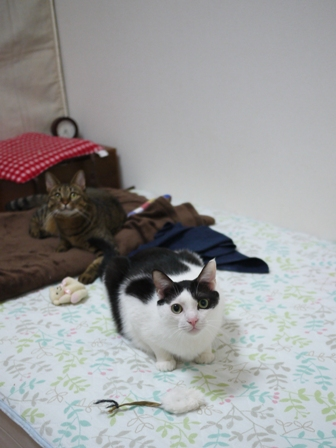 猫のお友だち 八朔くん柚子ちゃん編。_a0143140_23103997.jpg