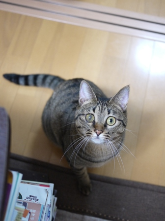 猫のお友だち 八朔くん柚子ちゃん編。_a0143140_2311774.jpg