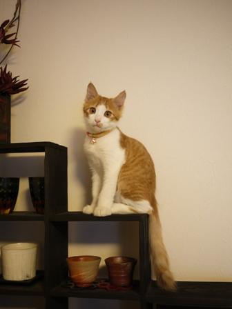 猫のお友だち もんてぃーくん編。_a0143140_23294941.jpg