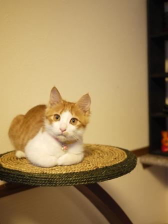 猫のお友だち もんてぃーくん編。_a0143140_23311915.jpg