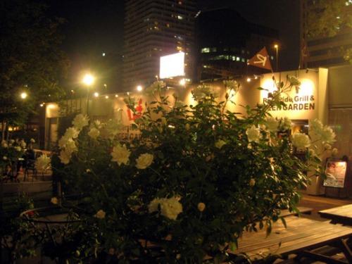 2013 10/14 夜のバラ園_e0213444_14502437.jpg