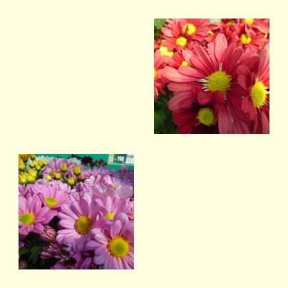 f0031546_12495174.jpg