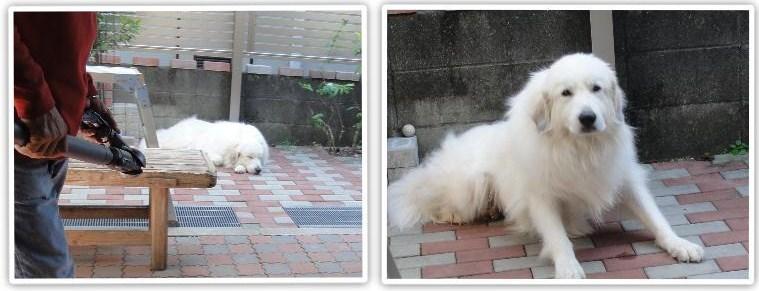 佐賀城で3Dマッピングが・・_a0201257_16301043.jpg