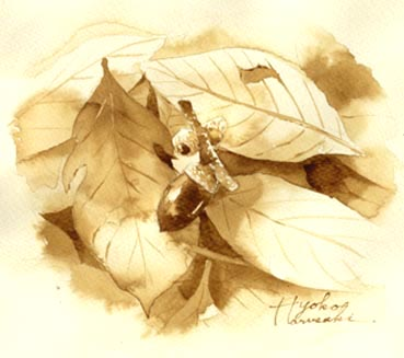 コーヒーで描くどんぐり_f0176370_192439.jpg