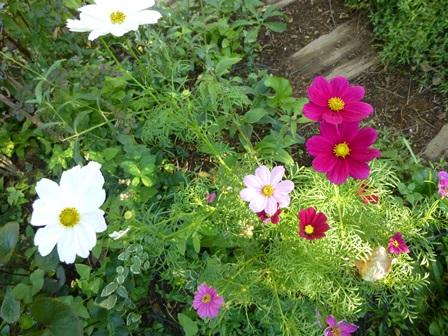 マグノリアの花がいちめんに咲く日まで、ワークショップ総括!_a0053480_11104559.jpg