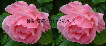c0119197_1023288.jpg