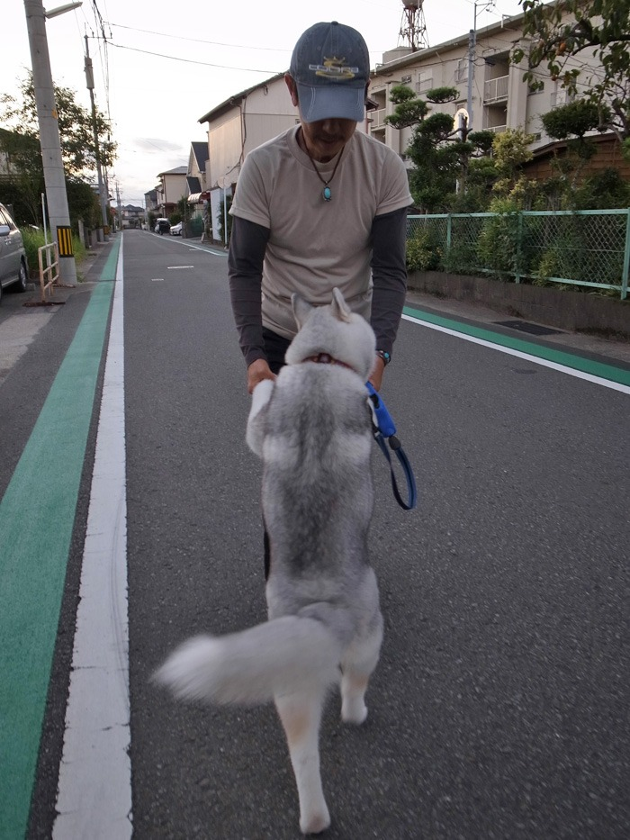 子犬 ただ今練習中_c0049299_21365380.jpg