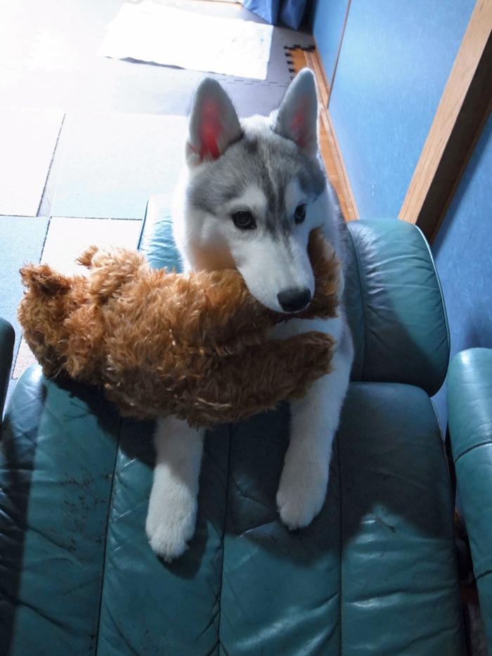 子犬 ただ今練習中_c0049299_21442166.jpg