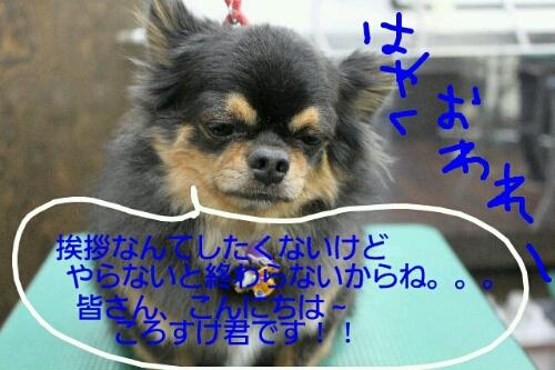 b0130018_18205191.jpg