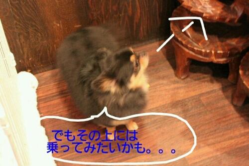 b0130018_18211076.jpg