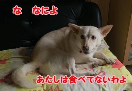 f0195543_1503124.jpg