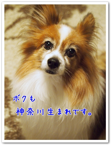 d0013149_21551738.jpg