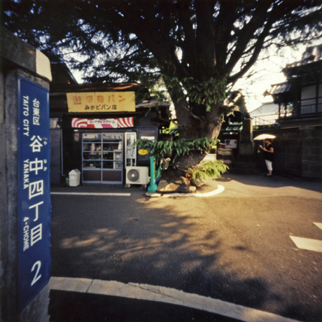 谷中のヒマヤラ杉 Pinhole Photography_f0117059_1942571.jpg