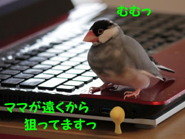 b0158061_2213347.jpg