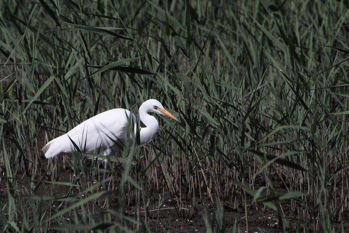 ★あの鳥、再び/先週末の鳥類園(2013.10.12~14)_e0046474_1642632.jpg