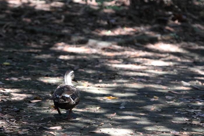 ★あの鳥、再び/先週末の鳥類園(2013.10.12~14)_e0046474_1642871.jpg