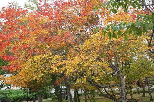 滝と紅葉めぐり・・3 野鳥の森 _d0162994_825320.jpg
