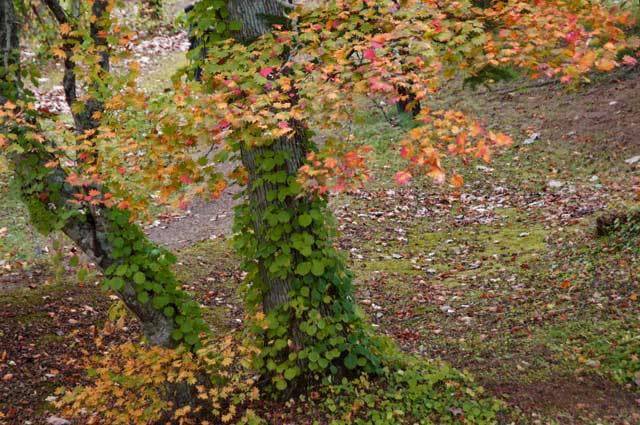滝と紅葉めぐり・・3 野鳥の森 _d0162994_833356.jpg