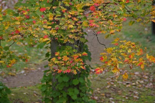 滝と紅葉めぐり・・3 野鳥の森 _d0162994_835014.jpg
