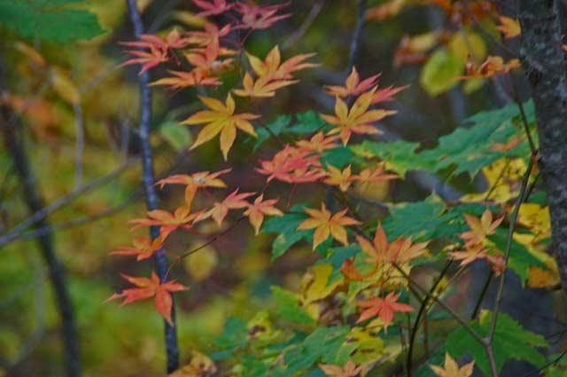滝と紅葉めぐり・・3 野鳥の森 _d0162994_84742.jpg
