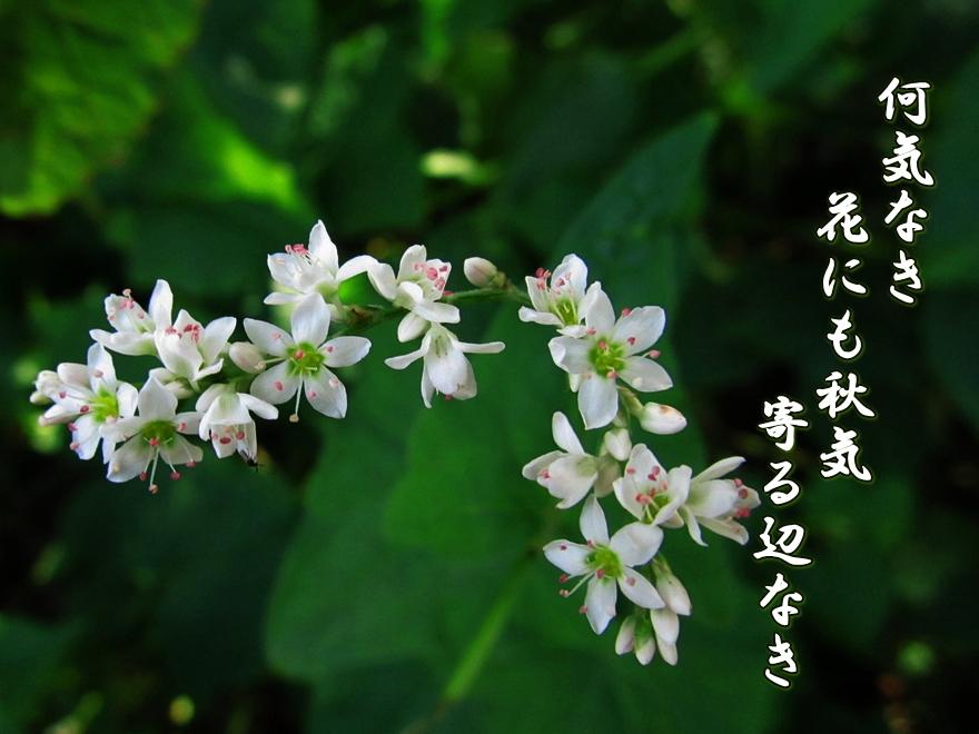 f0137096_18471317.jpg