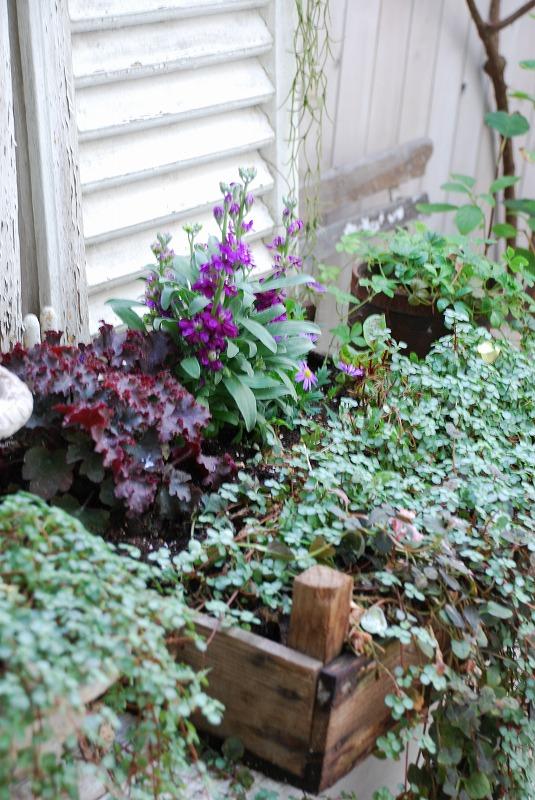 gardening_b0175400_17443637.jpg
