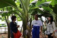 ++横浜でバナナ栽培@カネコ農園++_e0140921_23141962.jpg