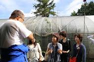 ++横浜でバナナ栽培@カネコ農園++_e0140921_2315595.jpg
