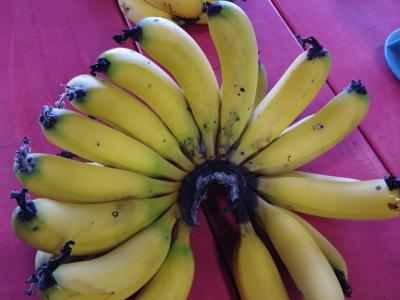 ++横浜でバナナ栽培@カネコ農園++_e0140921_23162310.jpg