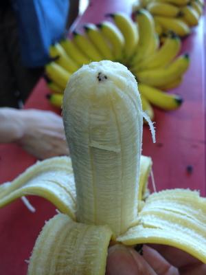 ++横浜でバナナ栽培@カネコ農園++_e0140921_23164181.jpg