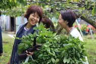 ++横浜でバナナ栽培@カネコ農園++_e0140921_23244219.jpg