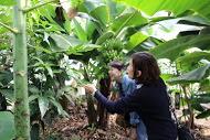 ++横浜でバナナ栽培@カネコ農園++_e0140921_23263051.jpg