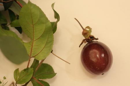 秋の装花 絵本と収穫祭 代官山PACHON様へ_a0042928_21554169.jpg