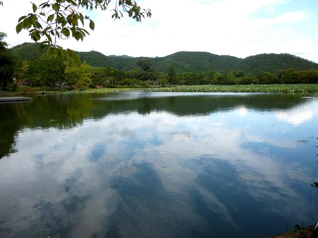 京都   (嵐山    嵯峨野 大沢の池  編)_d0105967_19585926.jpg
