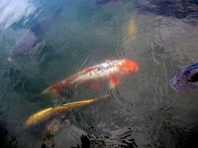 京都   (嵐山    嵯峨野 大沢の池  編)_d0105967_202035.jpg